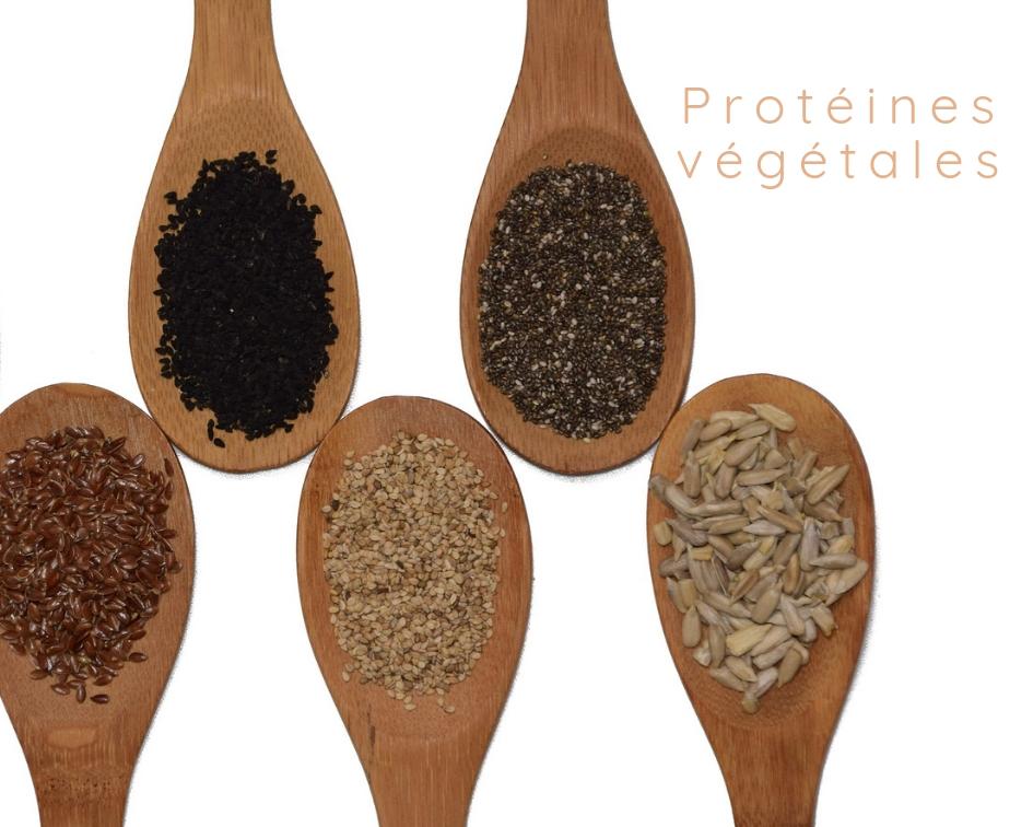 Protéines végétales, vos alliés du quotidien