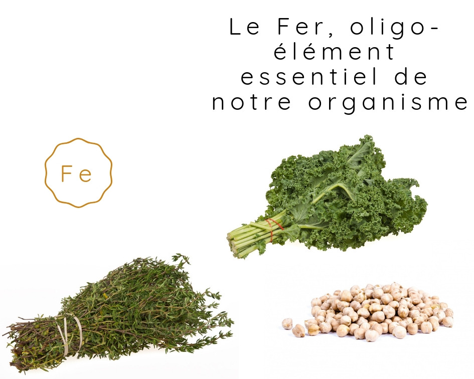 Le Fer, oligo-élément essentiel de notre organisme